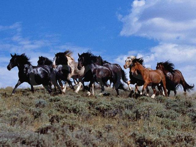 Fotos de caballos criollos en argentina 32